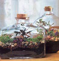 weitere kulturmethoden pflege von zimmerpflanzen zimmerpflanzen zimmer und gartenblumen. Black Bedroom Furniture Sets. Home Design Ideas