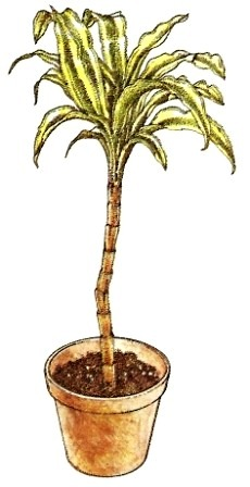 Vegetative vermehrung pflege von zimmerpflanzen for Zimmerpflanzen umpflanzen