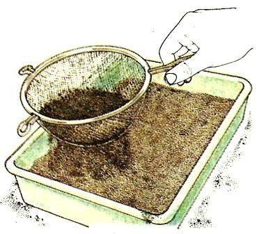 wie man die richtigen bedingungen schafft vermehrung pflege von zimmerpflanzen. Black Bedroom Furniture Sets. Home Design Ideas