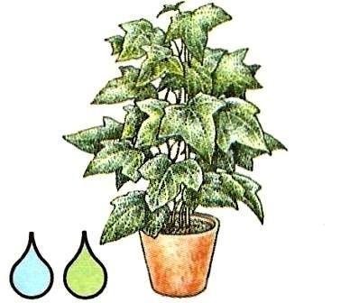 der wachstumszyklus pflege von zimmerpflanzen. Black Bedroom Furniture Sets. Home Design Ideas