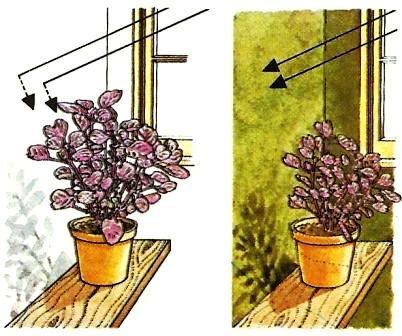 licht pflege von zimmerpflanzen zimmerpflanzen zimmer und gartenblumen. Black Bedroom Furniture Sets. Home Design Ideas