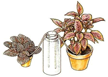 Gießen - Pflege Von Zimmerpflanzen - Zimmerpflanzen - Zimmer- Und ... Pflanzen Bewassern