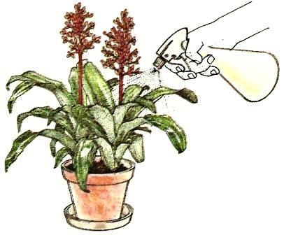 d ngen pflege von zimmerpflanzen zimmerpflanzen zimmer und gartenblumen. Black Bedroom Furniture Sets. Home Design Ideas