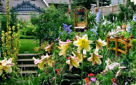 Gartenpflanzen A-Z - Pflanzenporträts