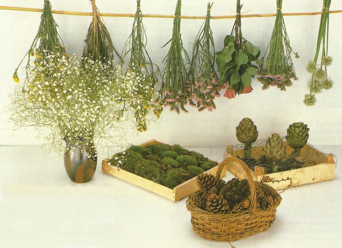 Strohblumen Trocknen gestalten mit trockenblumen gartenpflanzen garten