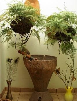Pflanzengruppen pflanzen plazieren und gruppieren raum for Raum pflanzen