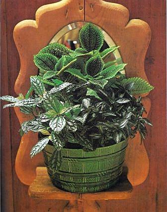 Pflanzen plazieren und gruppieren raum zimmerpflanzen for Raum pflanzen