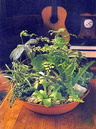 Schattenliebende Pflanzen miniaturgärten raum zimmerpflanzen zimmerblumen