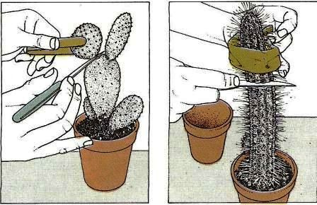 wie oft muss man einen kaktus gie en gr ser im k bel berwintern. Black Bedroom Furniture Sets. Home Design Ideas