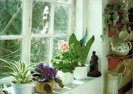 zimmer und gartenblumen. Black Bedroom Furniture Sets. Home Design Ideas