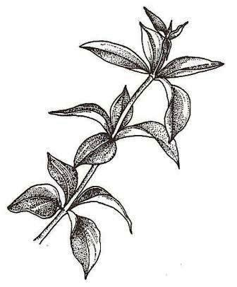 kleines abc der fachausdr cke zimmerpflanzen zimmer und gartenblumen. Black Bedroom Furniture Sets. Home Design Ideas