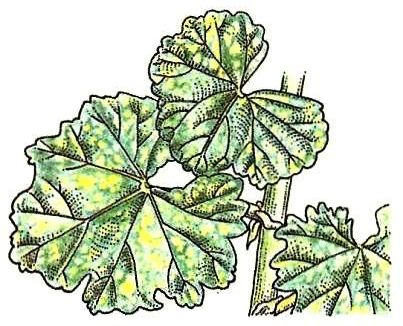 symptome und ursachen pflanzen gesund erhalten zimmerpflanzen zimmer und gartenblumen. Black Bedroom Furniture Sets. Home Design Ideas